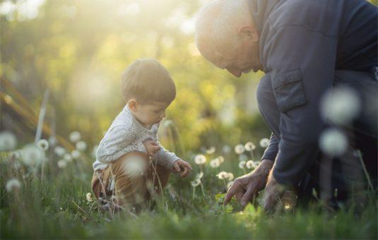 Großvater sitzt mit kleinem Jungen auf Wiese mit Pusteblumen